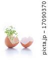割れた卵から新芽が成長している様子 17090370
