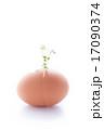 割れた卵から新芽が成長している様子 17090374
