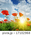field with poppies and sun on blue sky 17102968