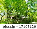 新緑 - 宝筐院 17108129