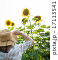 向日葵畑 花 向日葵の写真 17113541