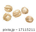 胡桃 ナッツ 実のイラスト 17115211