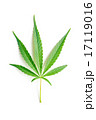 cannabis leaf 17119016