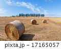 マイルドセブンの丘 干草ロール 北海道の写真 17165057
