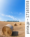 マイルドセブンの丘 干草ロール 北海道の写真 17165058