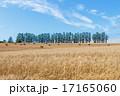 麦畑 マイルドセブンの丘 干草ロールの写真 17165060