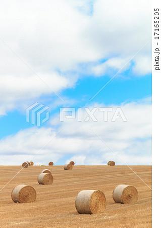 北海道 ロールと麦畑の丘 17165205