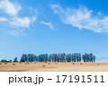 マイルドセブンの丘 麦畑 景色の写真 17191511