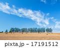 マイルドセブンの丘 麦畑 景色の写真 17191512