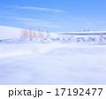 新雪 雪 北海道の写真 17192477