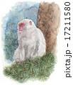 日本猿 動物 猿のイラスト 17211580