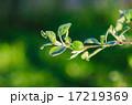 Branch 17219369