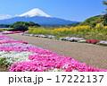 芝桜 山 富士山の写真 17222137