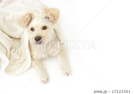 ミックス犬・俯瞰 17222301