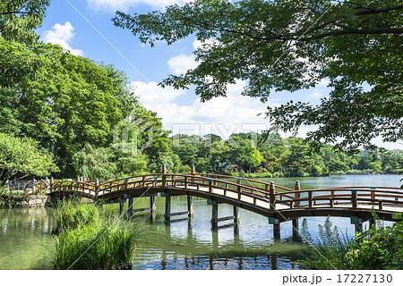 洗足池公園の太鼓橋の写真素材 [...