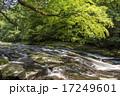 菊池渓谷 川 森林の写真 17249601