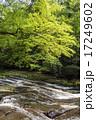 菊池渓谷 森林 川の写真 17249602