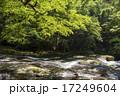 菊池渓谷 川 森林の写真 17249604
