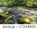 菊池渓谷 森林 川の写真 17249605