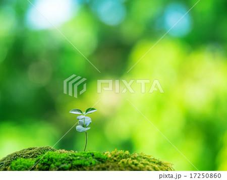 植物の芽生え 17250860