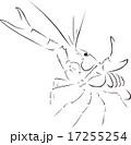 ザリガニ 17255254