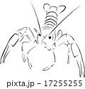 ザリガニ 17255255