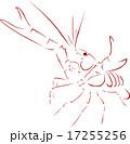 ザリガニ 17255256