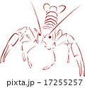 ザリガニ 17255257