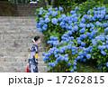 満開の紫陽花 17262815