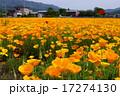 ポピーのお花畑 17274130