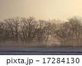夜明け 雪原 北上市の写真 17284130