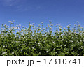 晴天の日のそばの花 17310741