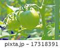 ミニトマト 17318391