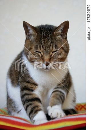 猫のふみふみ 17329679
