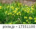 flowers 17351100