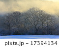 木 冬 雪の写真 17394134