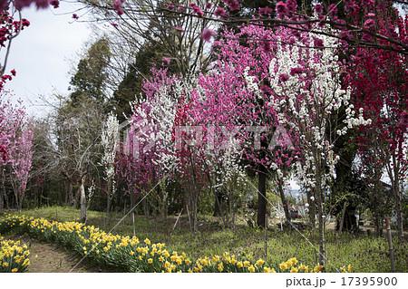 天神山ガーデン 17395900