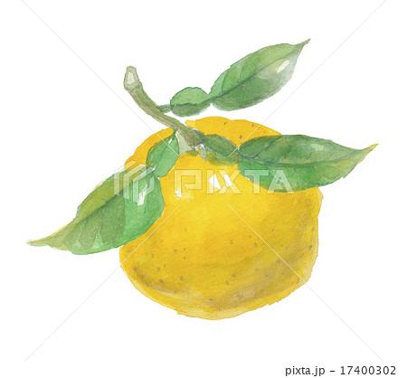 柚子 ゆず 17400302