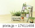多肉植物  17411408