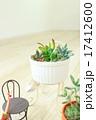 多肉植物 ミニ 17412600