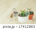 多肉植物 ミニ 17412863