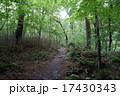 山梨県 吐竜の滝 林道 17430343