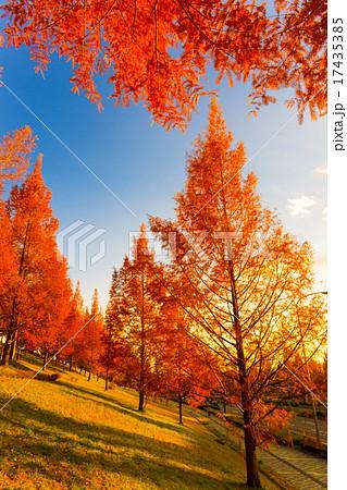 泉パークタウン「色付く街路樹」 17435385