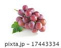 種なしピオーネ 17443334