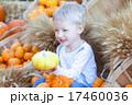 かぼちゃ カボチャ 南瓜の写真 17460036