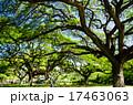 風景 木 公園の写真 17463063