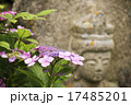 石仏 紫陽花 花の写真 17485201