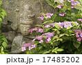石仏 紫陽花 花の写真 17485202