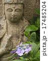 石仏 紫陽花 花の写真 17485204