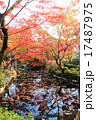 京都円山公園紅葉 17487975